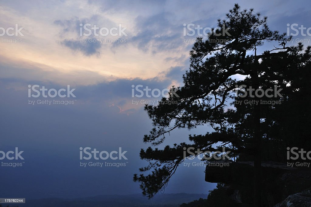Silhouette of pine at Lom Sak cliff for watch sunset. royalty-free stock photo