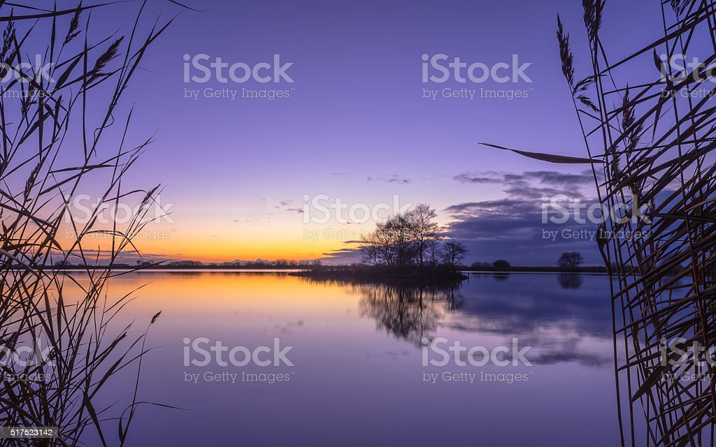 Silhouette of Reed with serene Lake during Purple Sunset stock photo