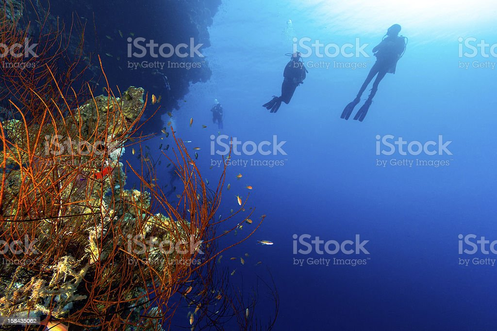 Silhouette of SCUBA Divers with a whip coral foreground stock photo