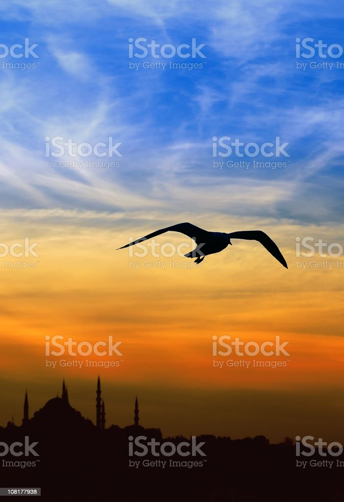 Silhouette of Seagull Flying Against Colorful Sunset Sky royalty-free stock photo