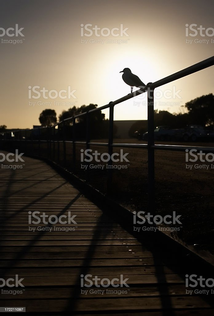Silhouette of seagull perched on railing at dusk stock photo