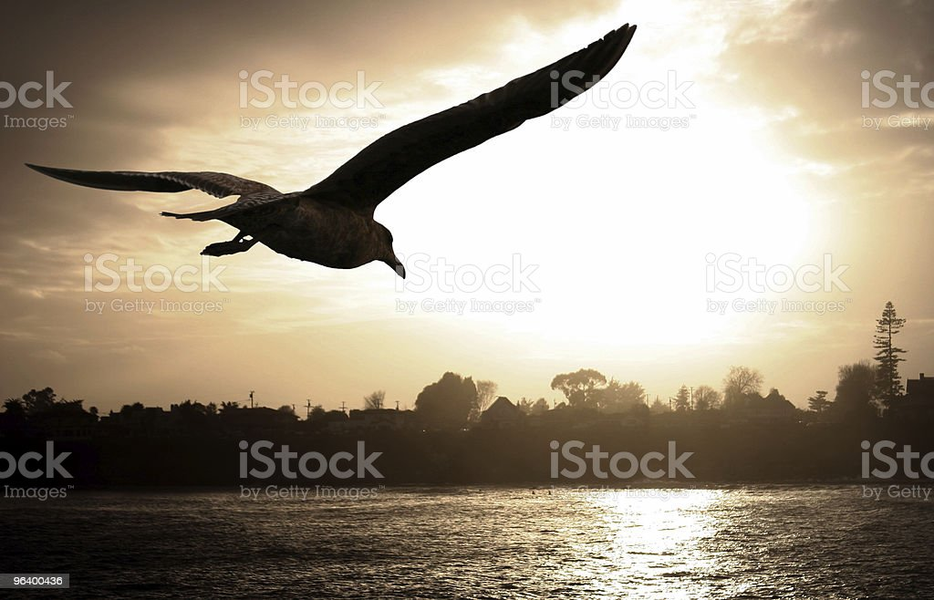 Silhouette of seagull soaring over the water at sunset royalty-free stock photo