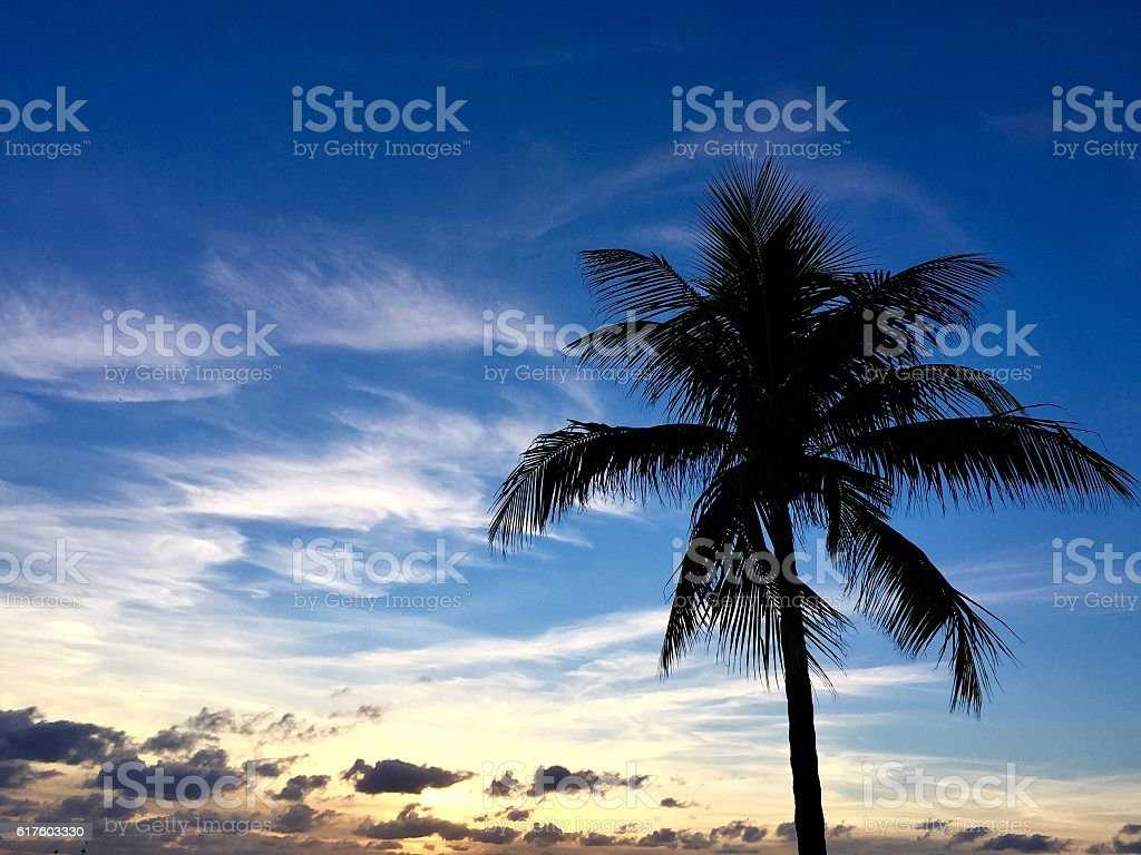 Silhouette of the palm tree with blue sky stock photo