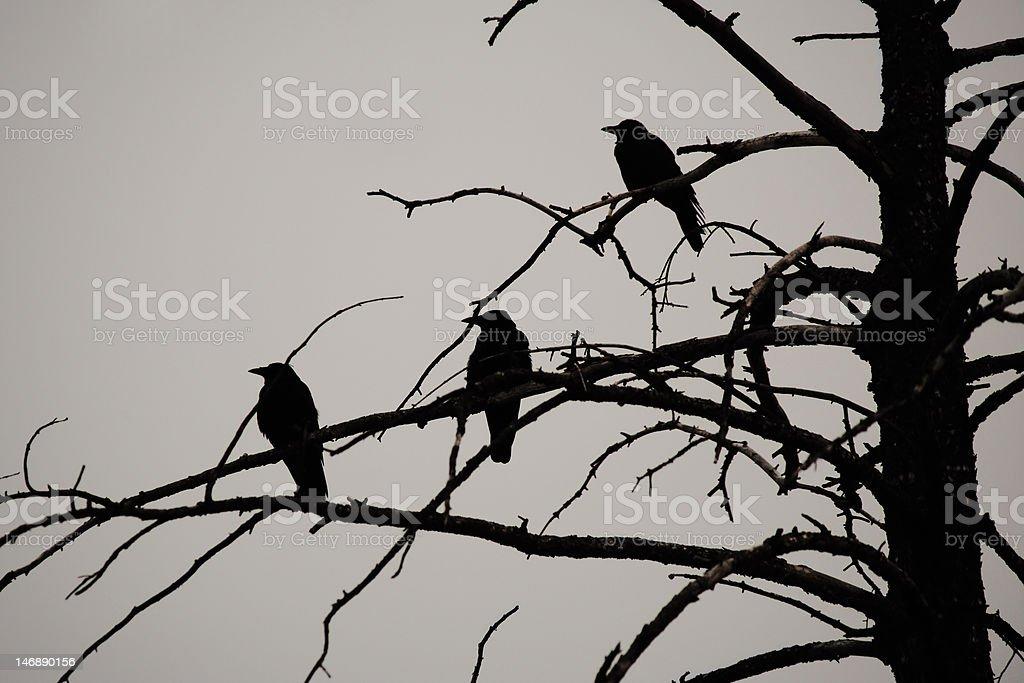 Silueta de árbol muerto en tres de gallo foto de stock libre de derechos