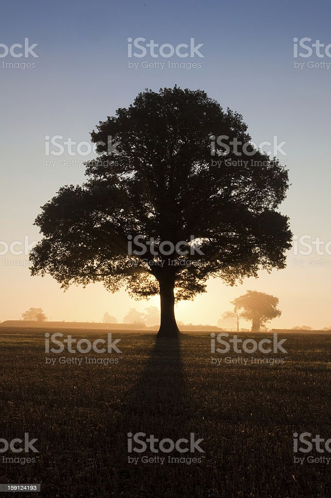 Silhouette of tree at sunrise stock photo