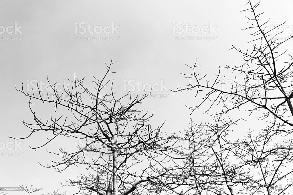 Silhouette of Tree branches in monochrome style stock photo