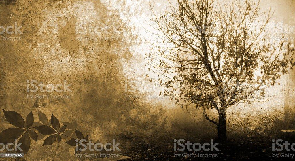 Silhouette of Tree Grunge stock photo