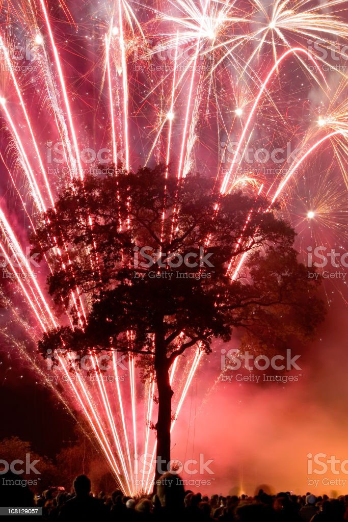 Silhouette of Tree Illuminated by Fireworks Display stock photo
