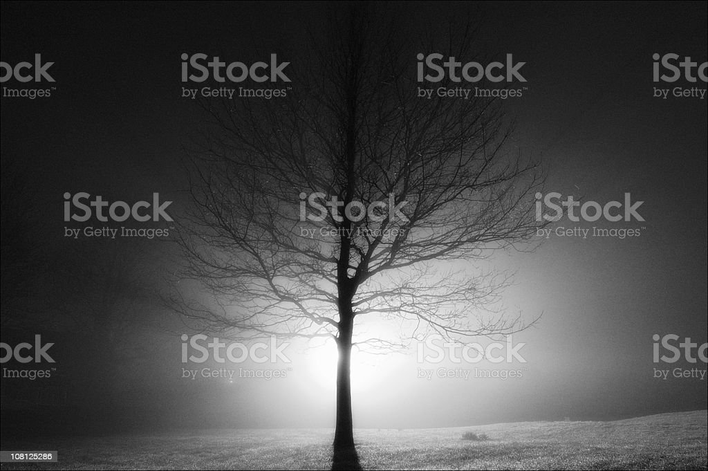 Silhouette of Tree in Fog, Backlit royalty-free stock photo