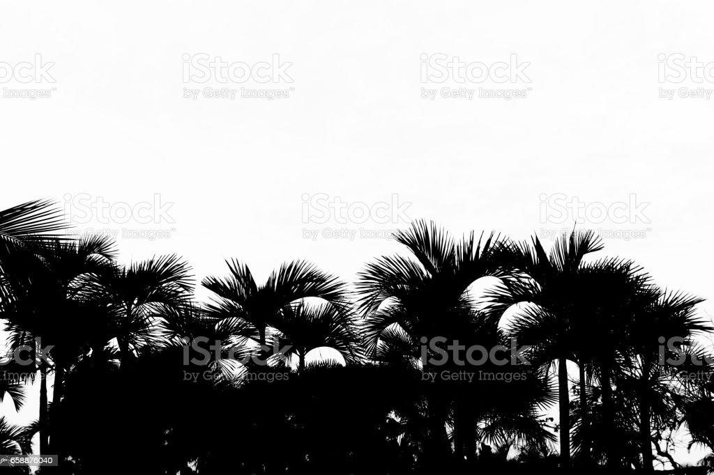Silhouette of tree isolated on white background. vector art illustration