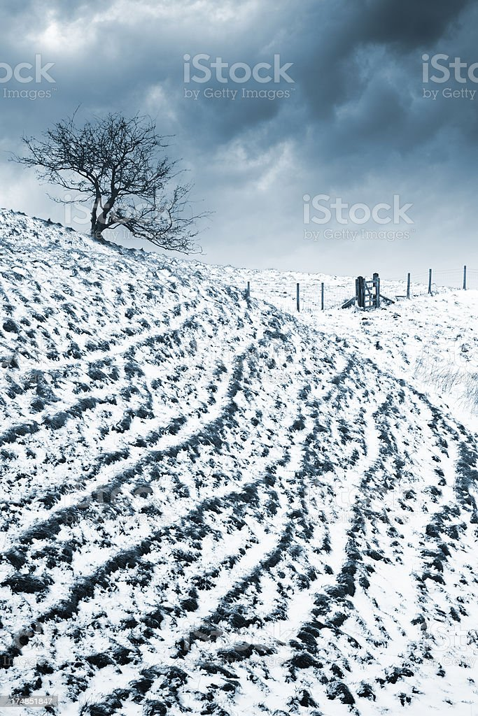 Silhouette of tree on hill in winter. stock photo
