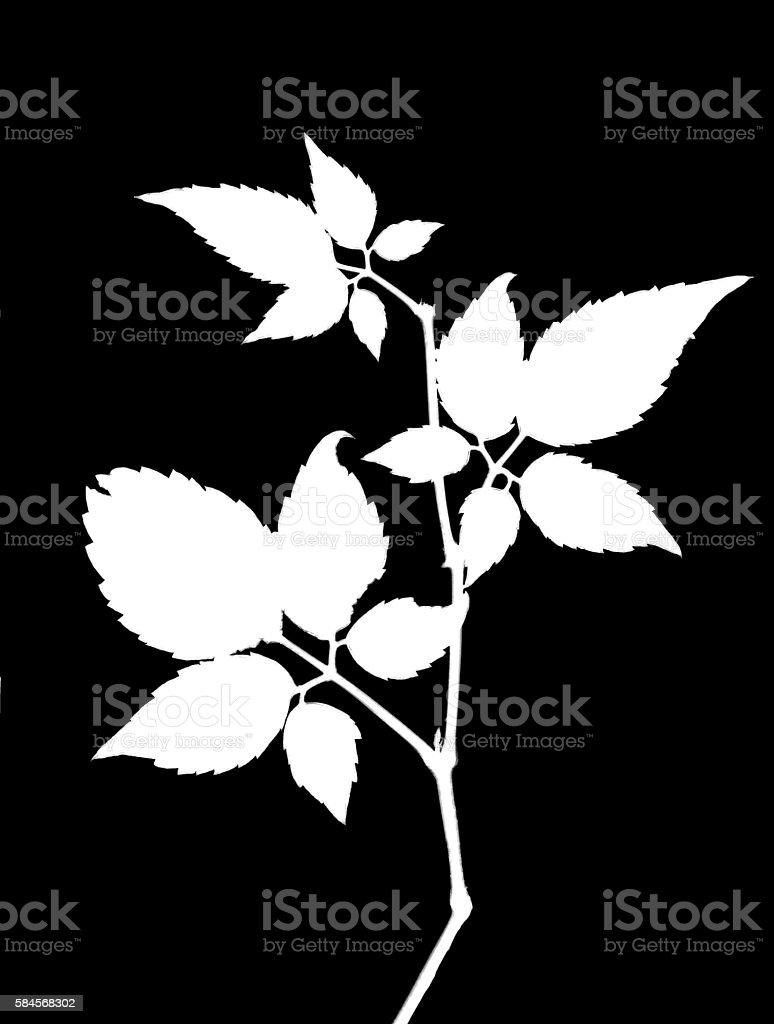 Silhouette of tree twig stock photo