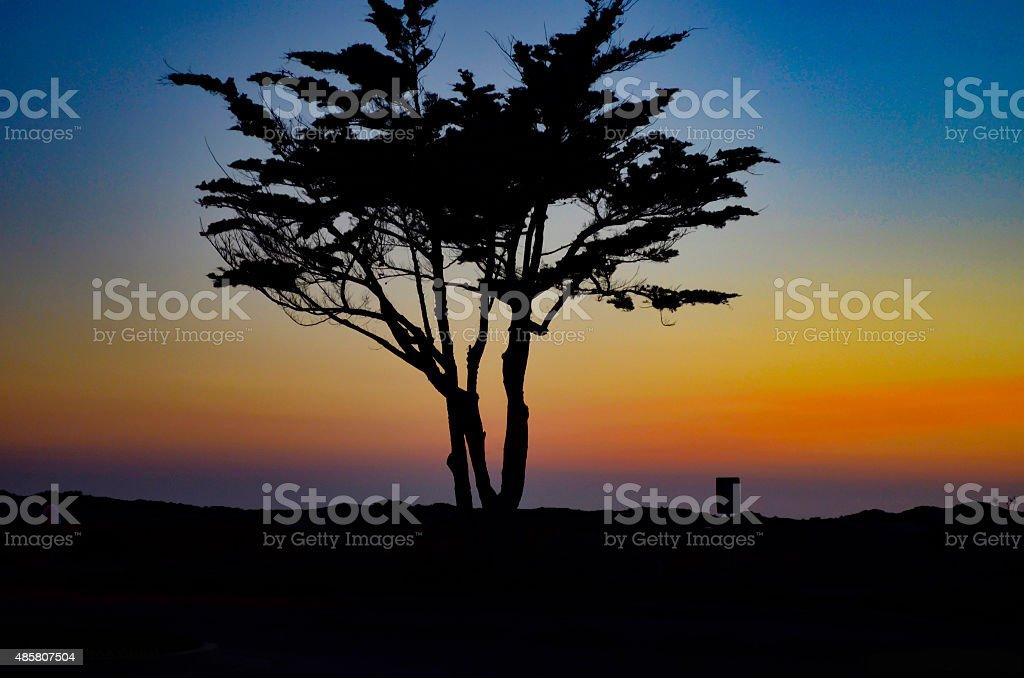 Silhouette of tree Ventura California stock photo