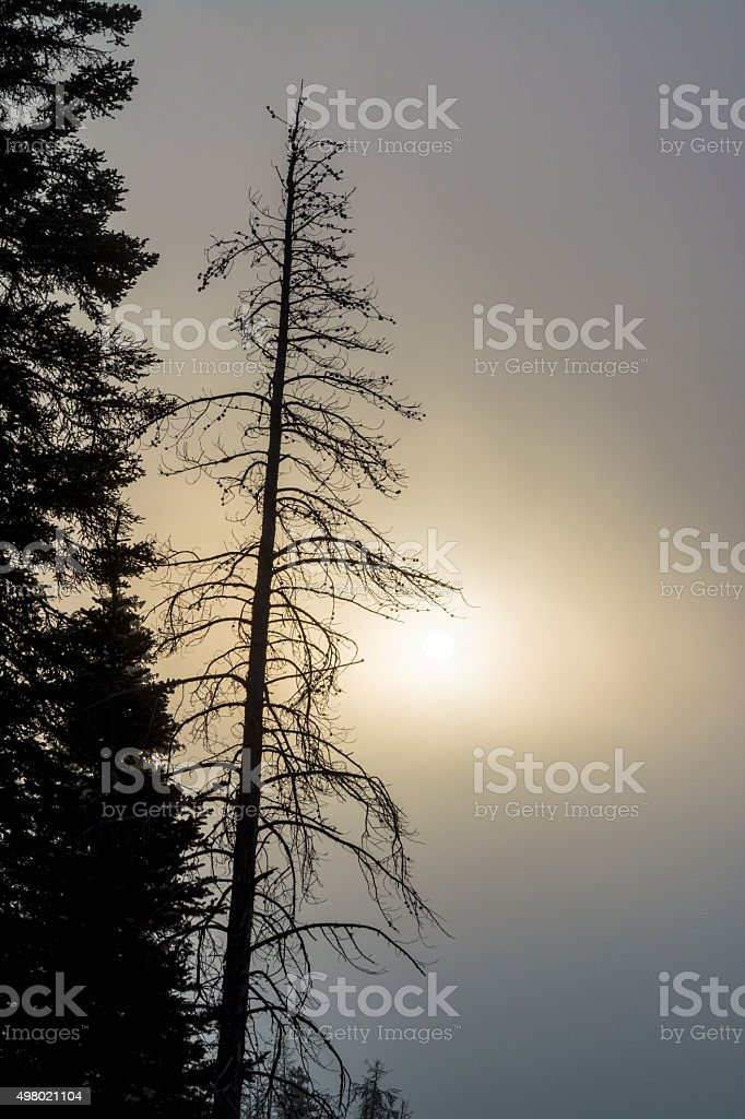 Silhouette of trees and sun through the fog stock photo