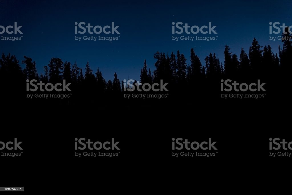 Silhouette of Trees at Night stock photo