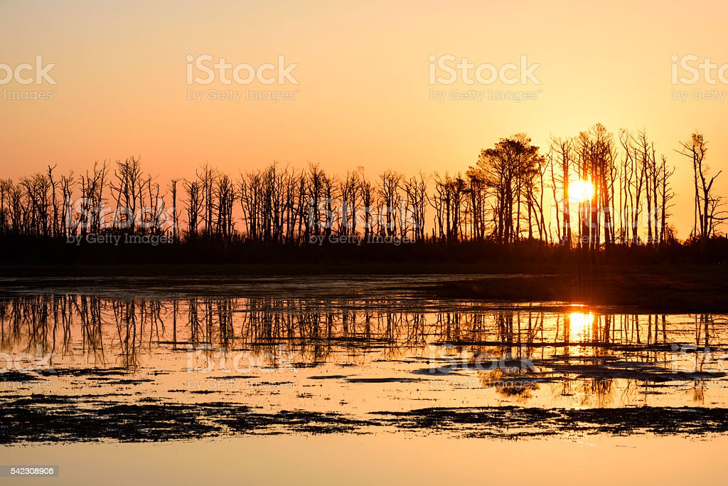 Silhouette of Trees at Sunrise Reflecting in Water stock photo