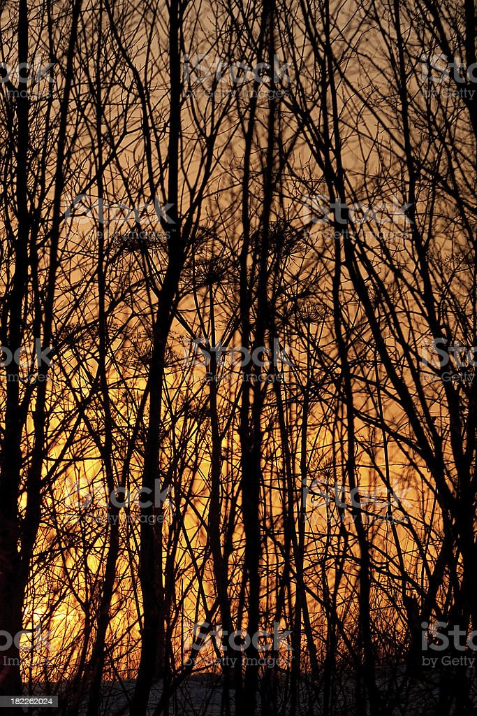 Silhouette of trees at sunset royalty-free stock photo