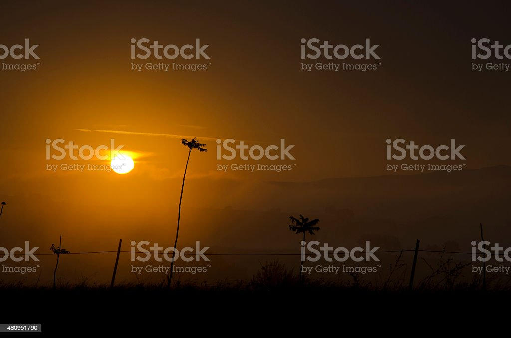 silhouette of trees in foggy sunrise stock photo