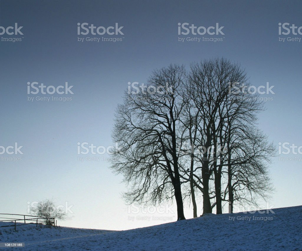 Silhouette of Trees in Winter Time with Snow royalty-free stock photo