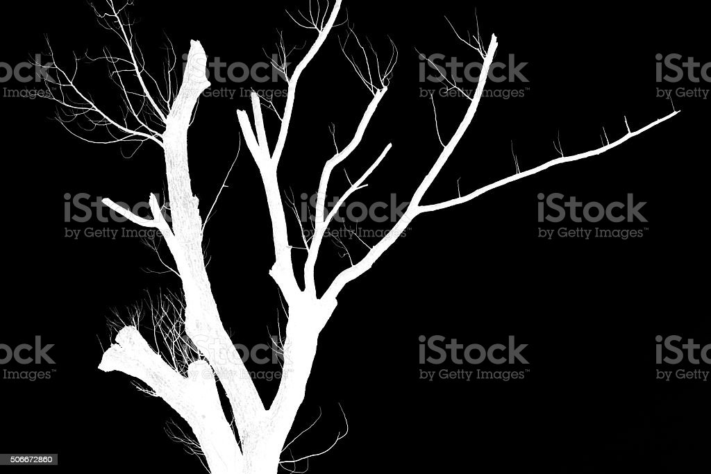 Silhouette of trees stock photo