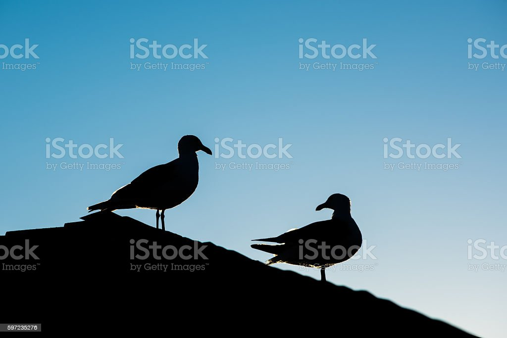 Silhouette of two seagulls on roof during sunset stock photo