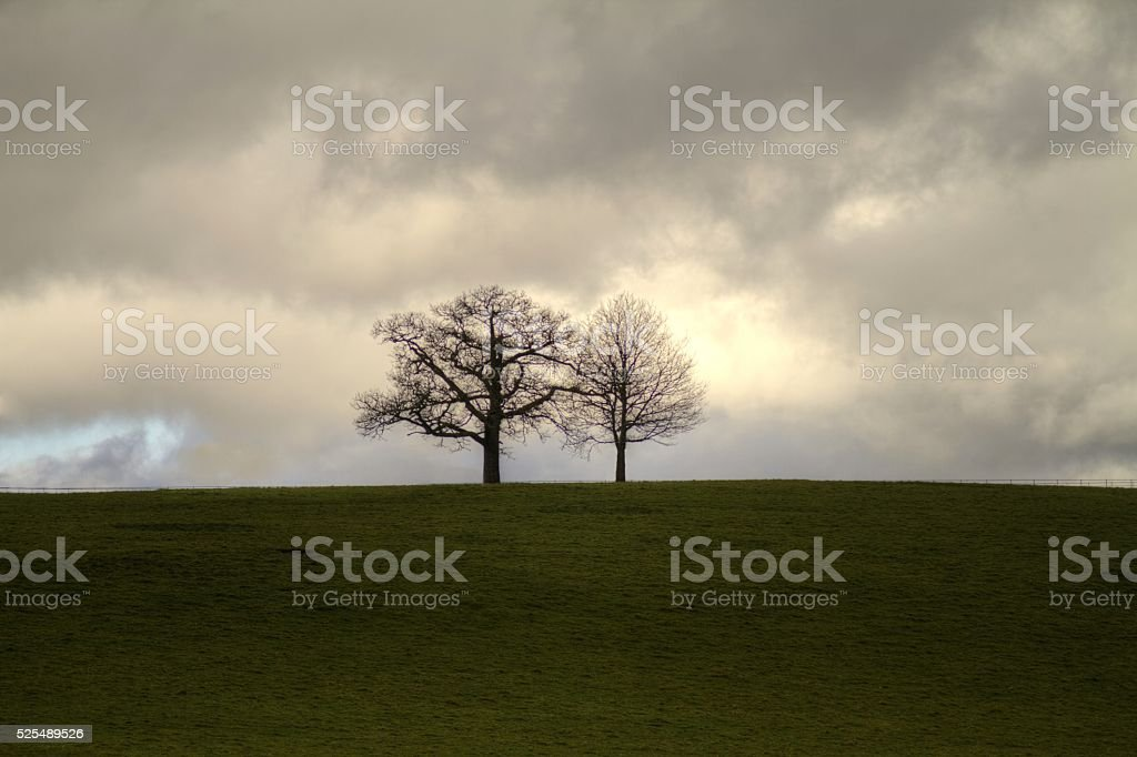 Silhouette of two trees on grassy bank stock photo