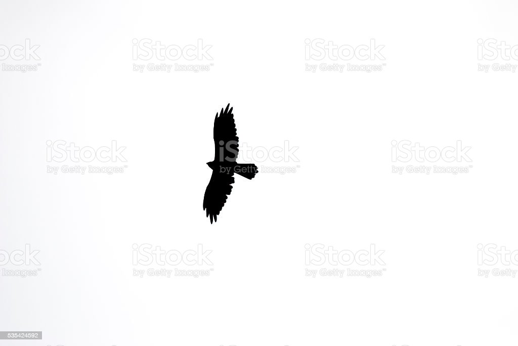 silhouette of wedge tail eagle stock photo