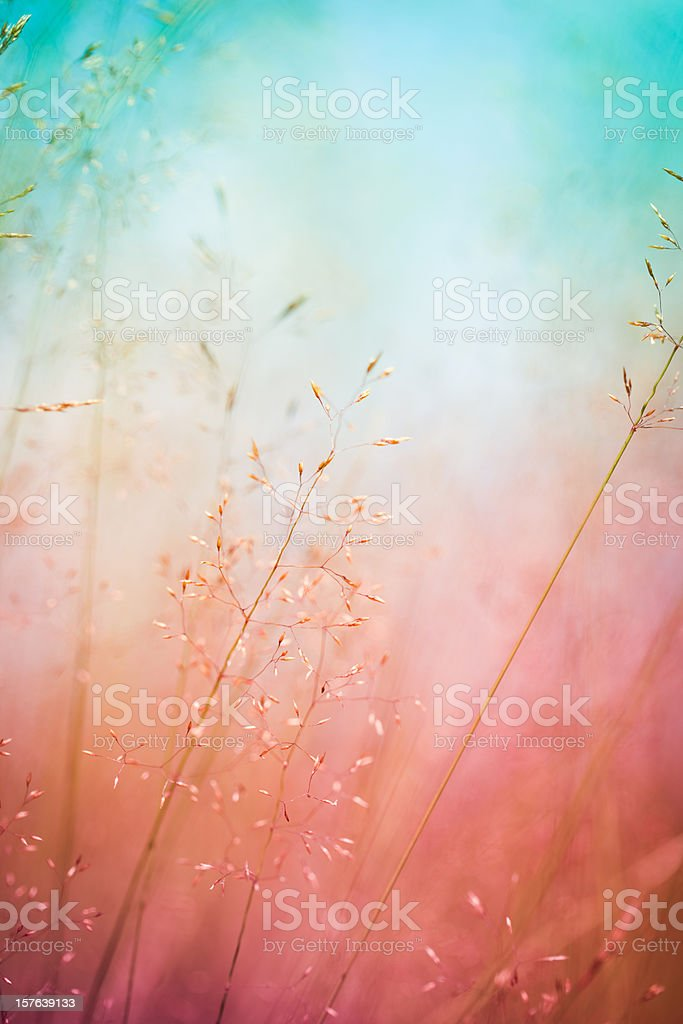 Silhouette of wildflowers in meadow during sunrise or sunset stock photo