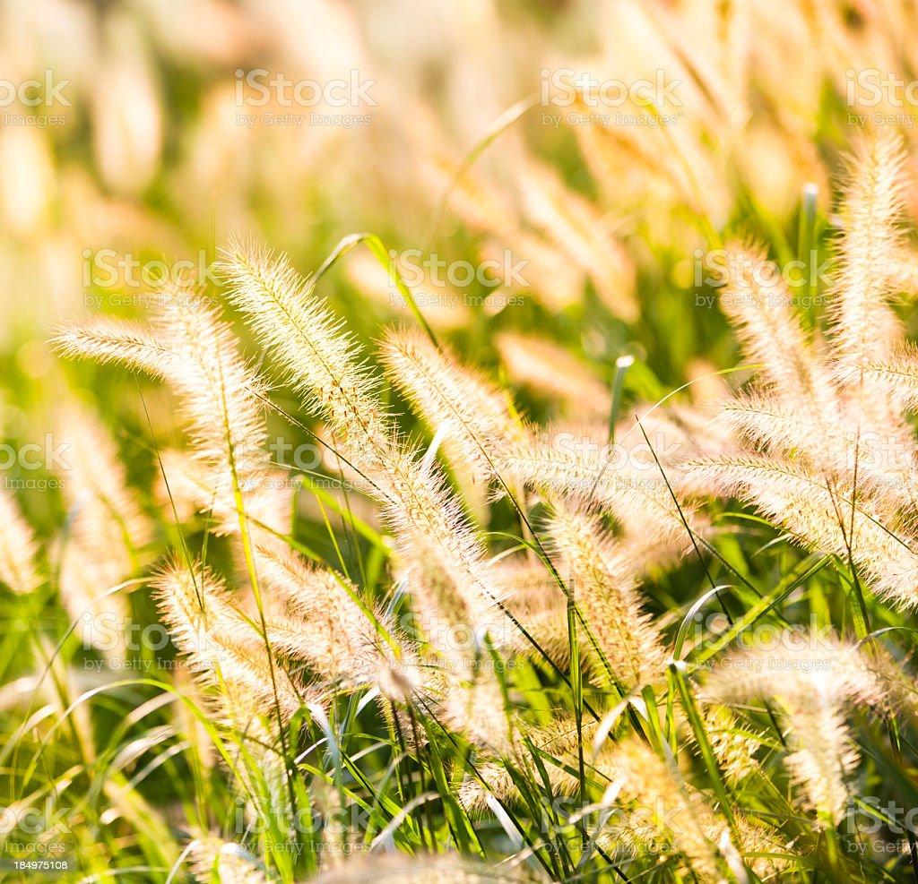 Silhouette of wildflowers royalty-free stock photo