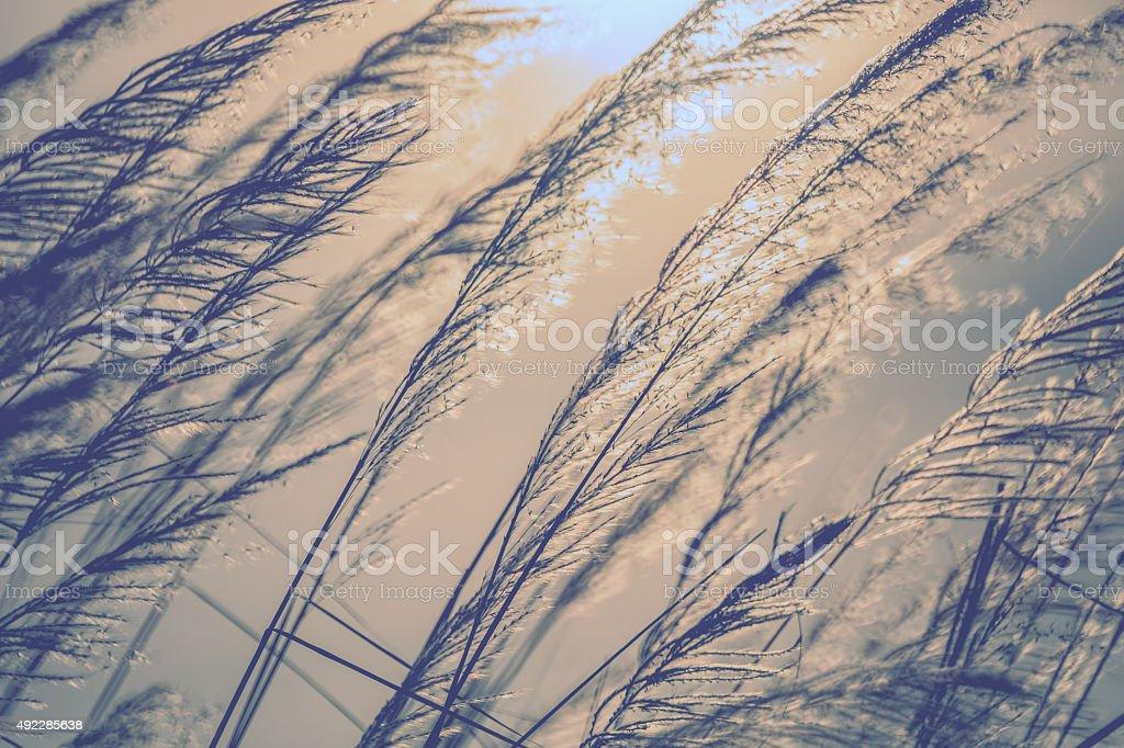 Silhouette of wildflowers stock photo