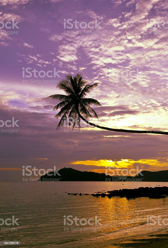 Silhouette Palm Tree royalty-free stock photo