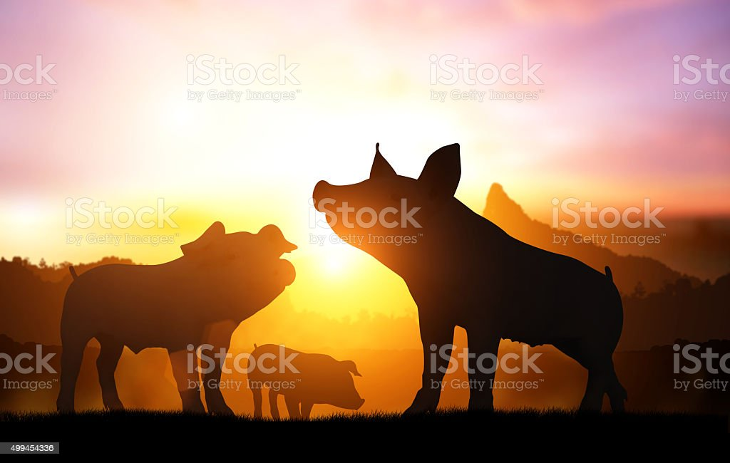 silhouette pig in sunset stock photo
