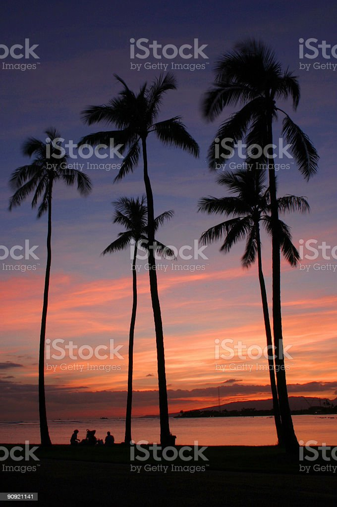 Silhouette, Sunset, Sunrise, Palm tree in Oahu stock photo