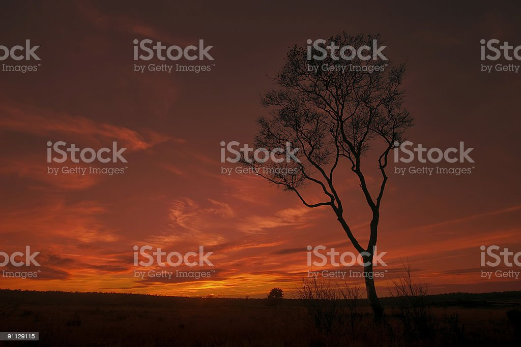 Silhouette tree in Sunset royalty-free stock photo