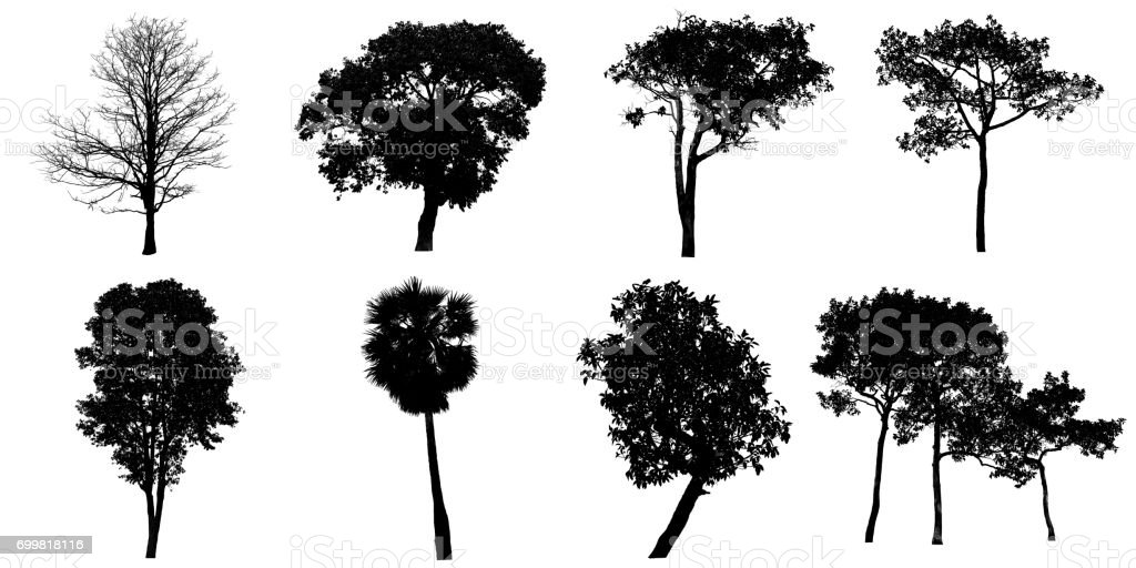 Silhouette tree Isolated on white background. stock photo