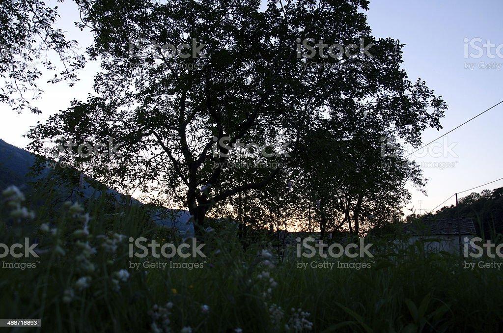 Silhouette Tree Sunrise royalty-free stock photo