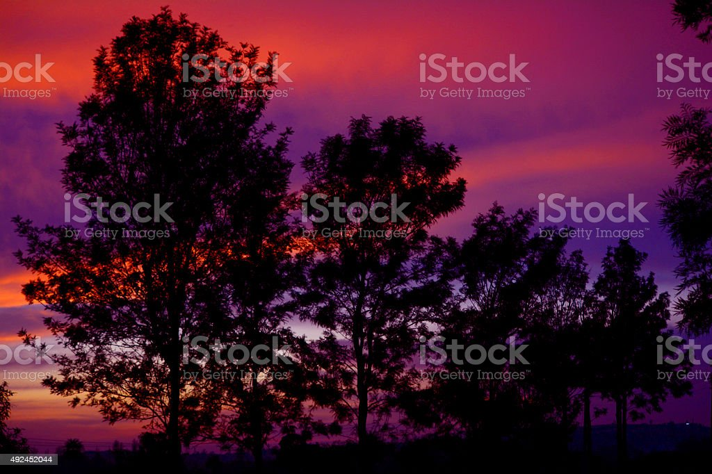 Silhouette Trees at Sunset stock photo