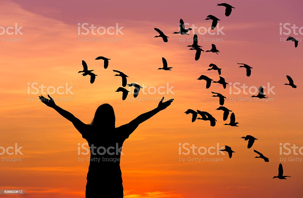 silhouette woman raised up hands during flock lesser whistling flying stock photo