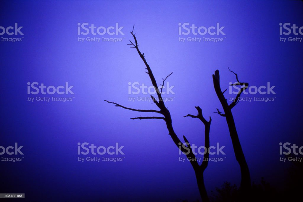 Silhouetted Bare Branches in a blue fog. stock photo