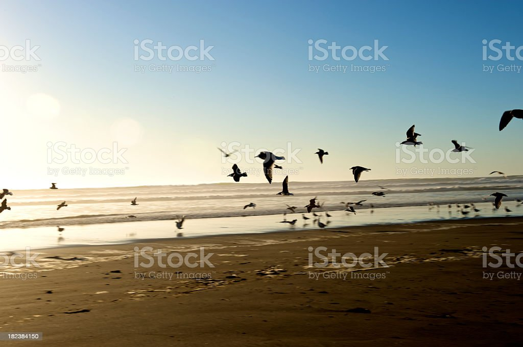 Silhouetted birds stock photo