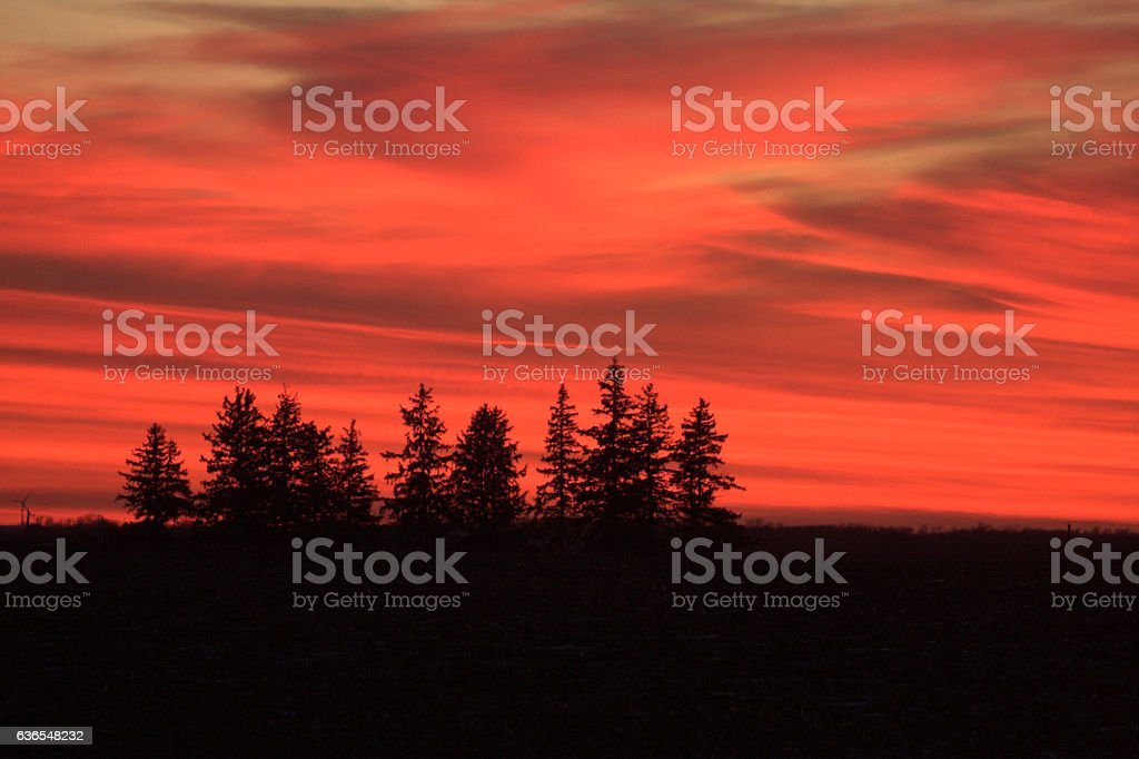 Silhouetted Evergreen Trees at Sunset stock photo