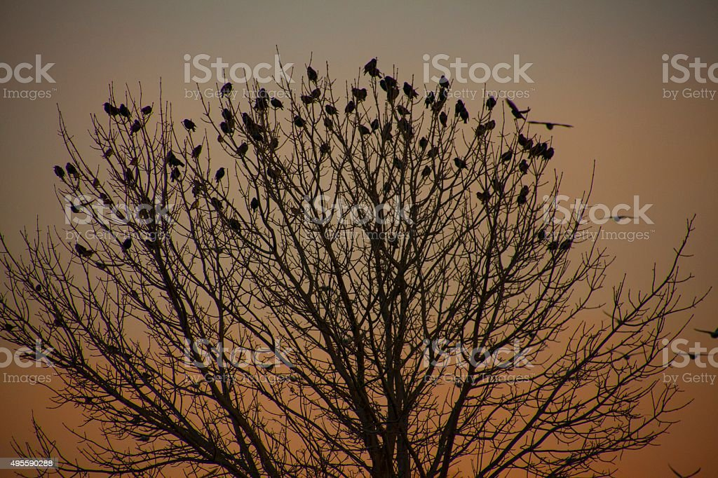Silhouetted Flock of Perched Birds stock photo