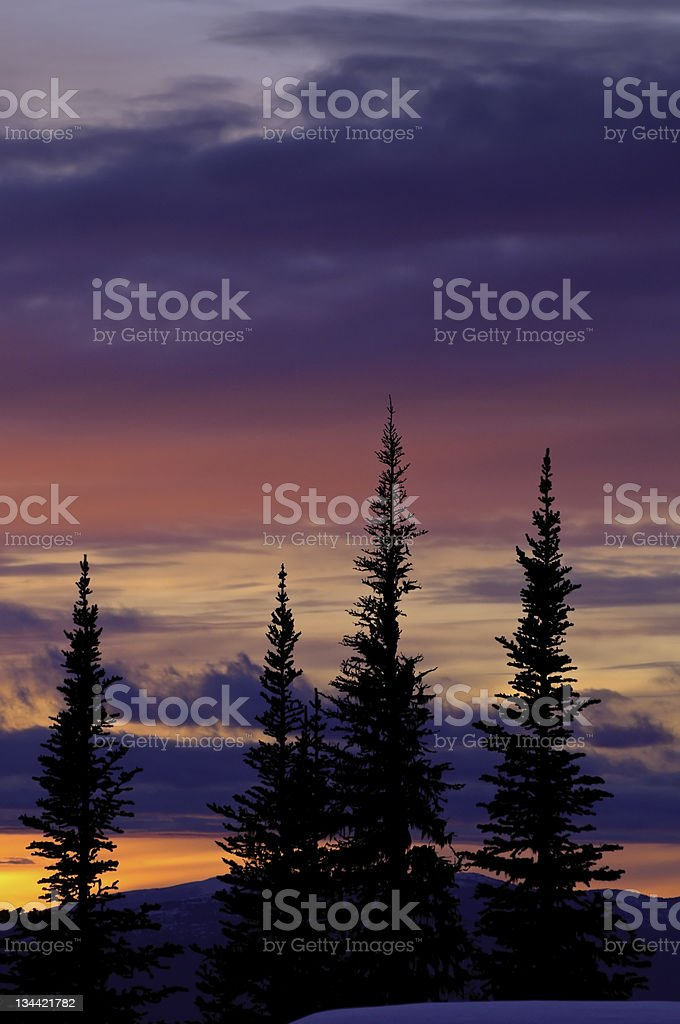 Silhouetted Forest Trees and Colorful Vibrant Sunset stock photo