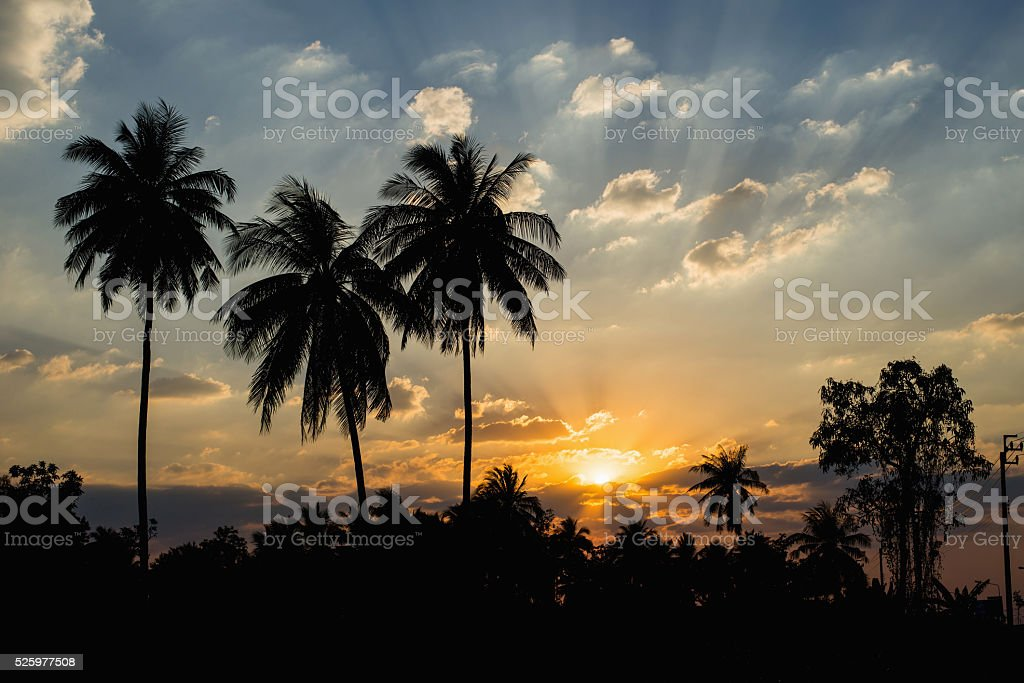 Silhouetted of coconut tree sunset stock photo