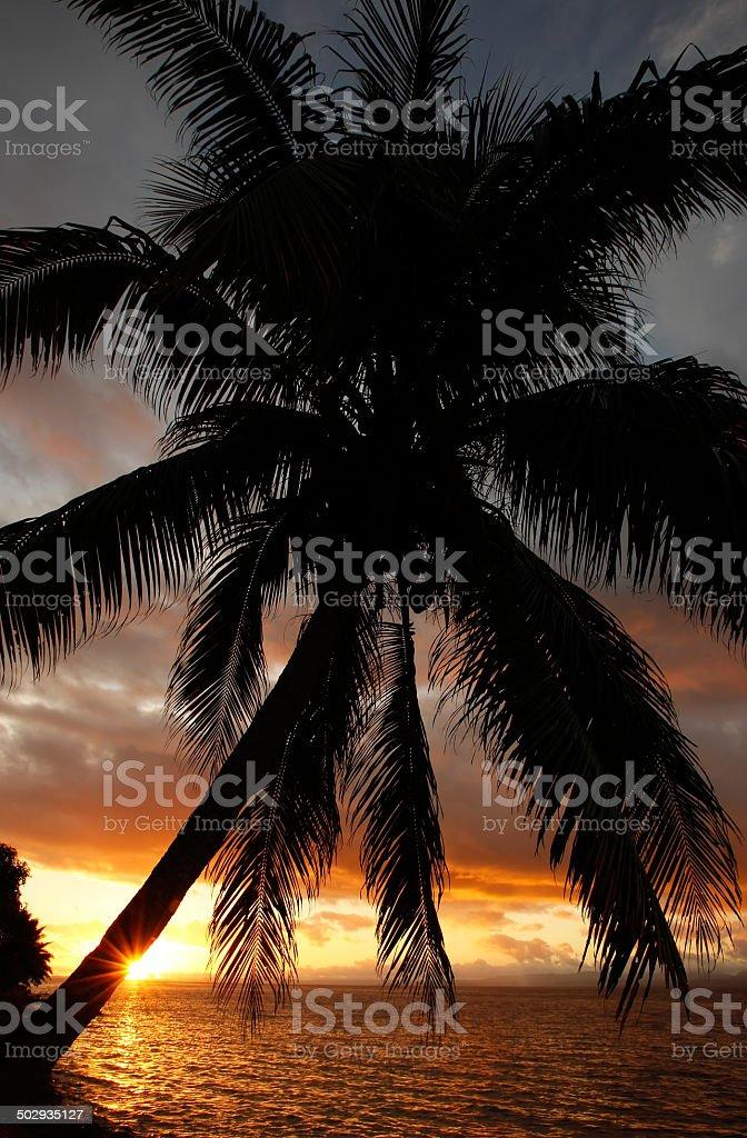 Silhouetted palm tree on a beach, Vanua Levu island, Fiji stock photo