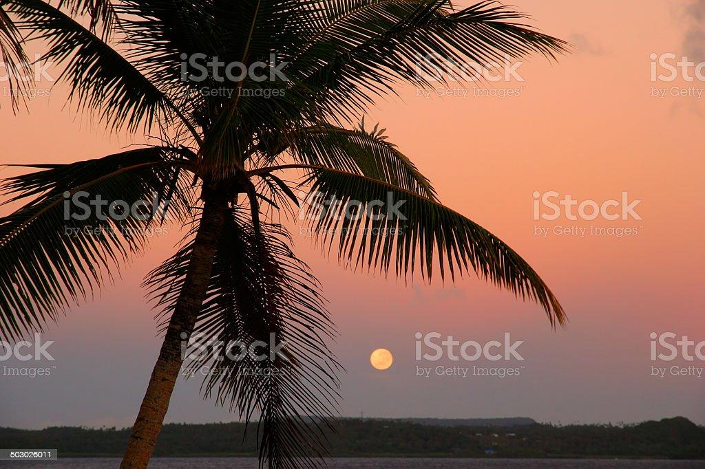 Silhouetted palm tree with the moon, Ofu island, Tonga stock photo
