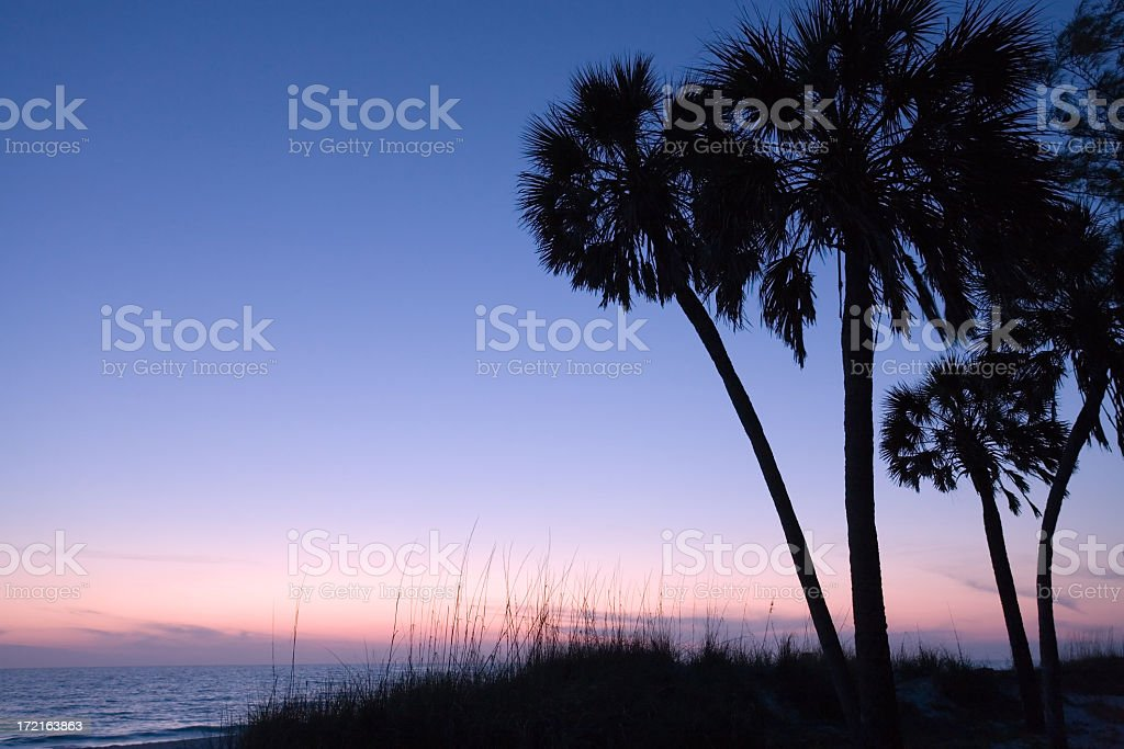 Silhouetted palm trees at sunset stock photo