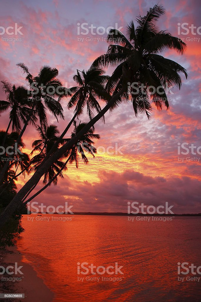 Silhouetted palm trees on a beach at sunset, Ofu, Tonga stock photo