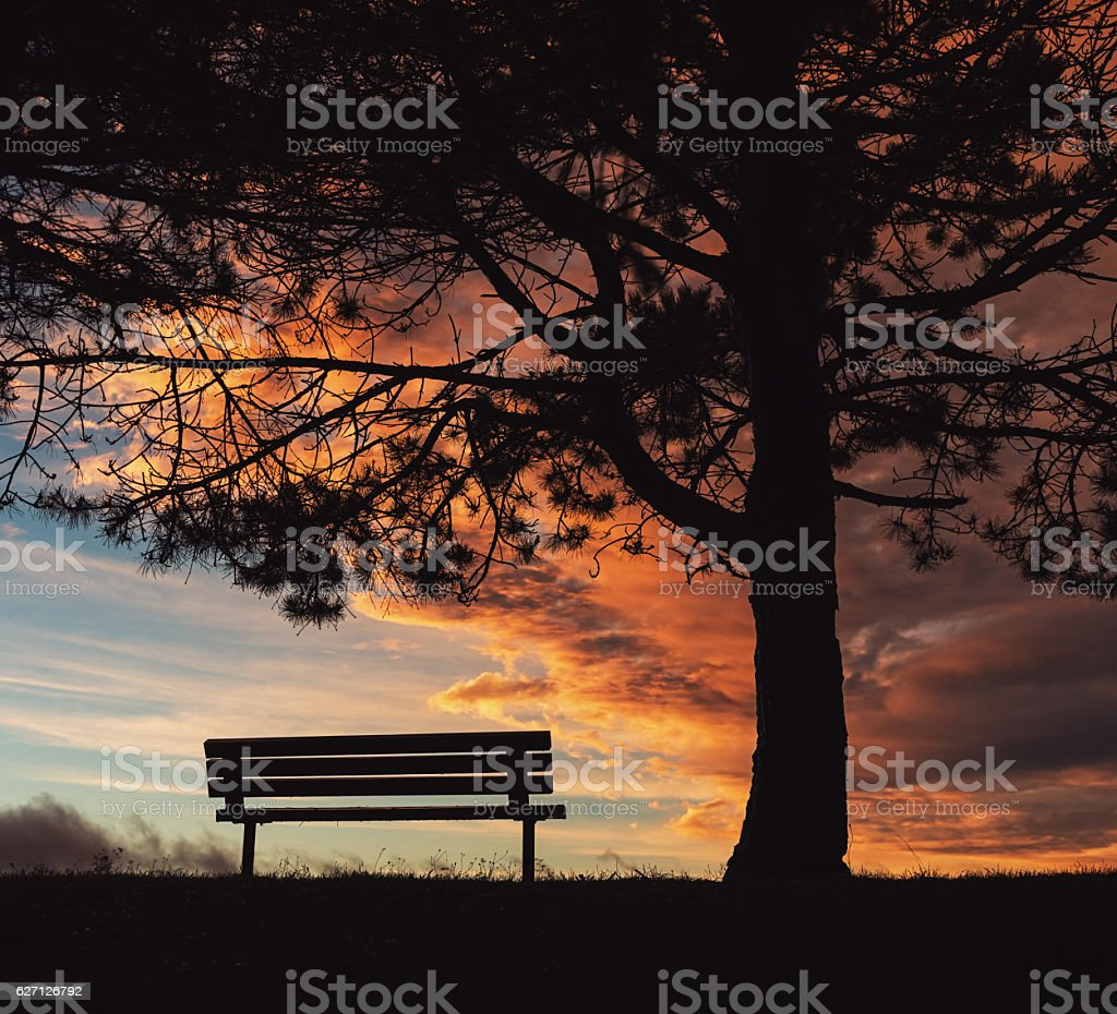 Silhouetted Sunset stock photo