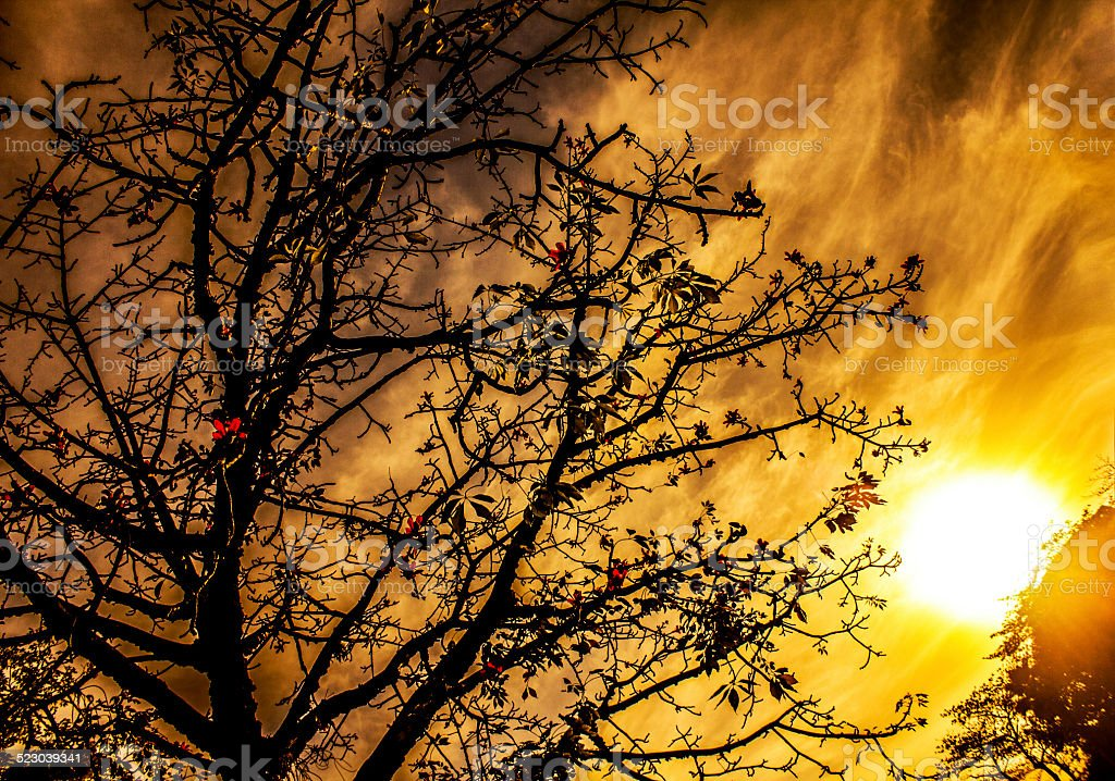 Silhouetted Tree Against Scorching Sun stock photo